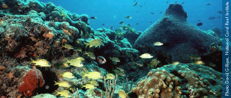 Coral Reef Conservation Initiative